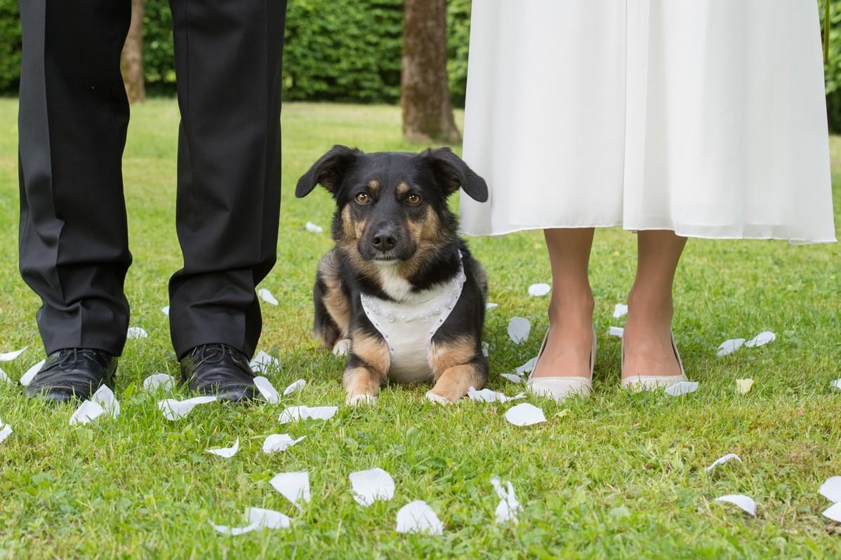 Hund liegt zwischen den Füßen des Brautpaares